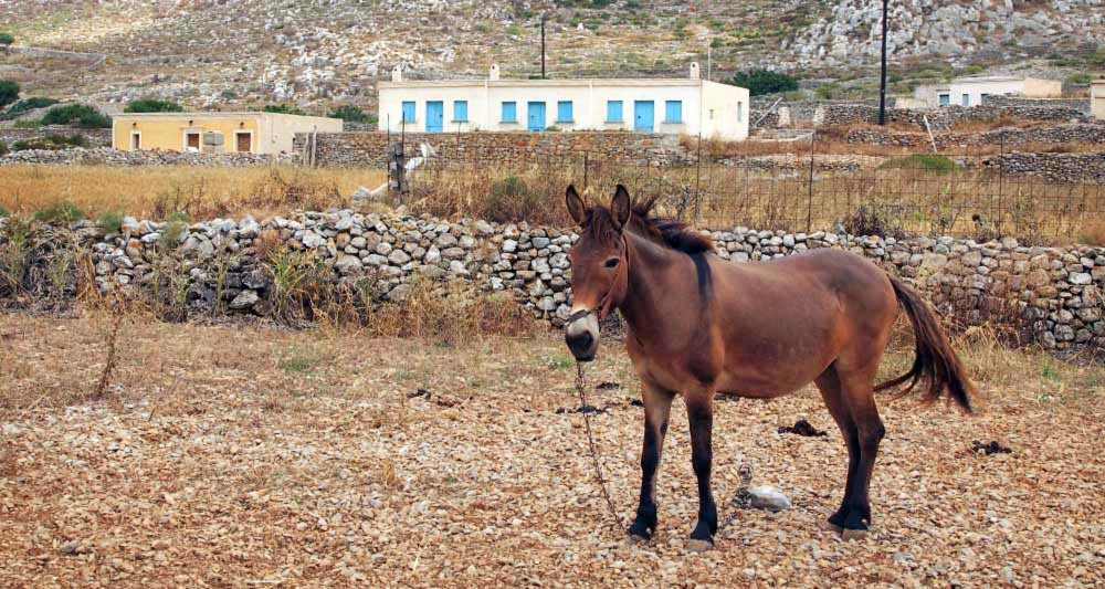 καρπαθος-πεν-1-6-2011-515